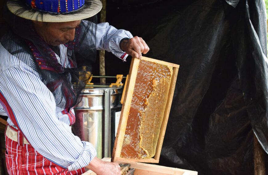 Producción apícola
